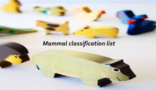 哺乳類の分類だいたい一覧リスト