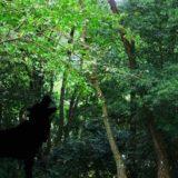 オオカミの影