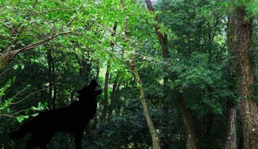 「日本狼とオオカミ」犬に進化しなかった獣、あるいは神