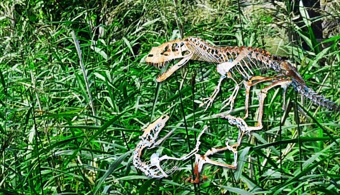 恐竜」中生代の大爬虫類の種類、...