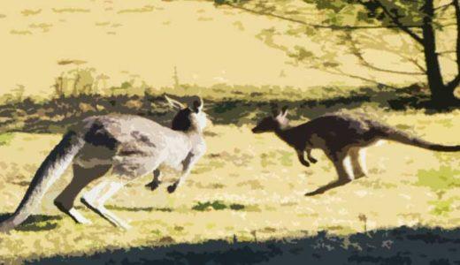 「有袋類」袋を持った哺乳類の進化と生態