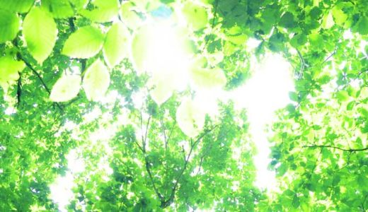 「光合成の仕組み」生態系を支える驚異の化学反応