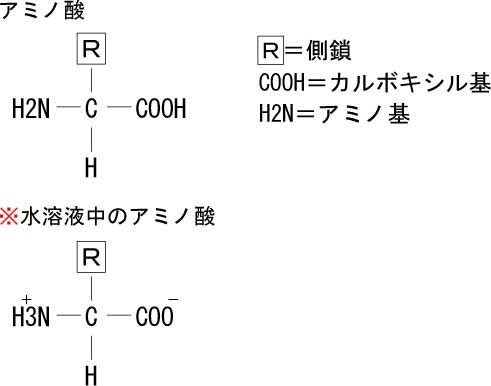 アミノ酸の基本配列