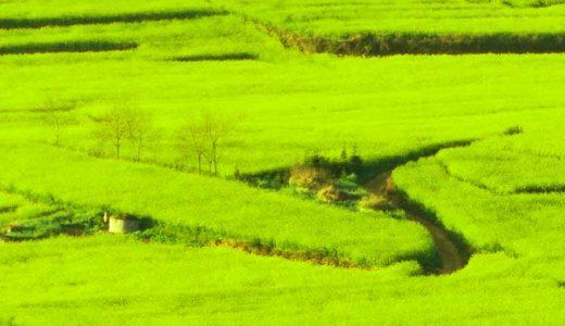 「夏王朝」開いた人物。史記の記述。実在したか。中国大陸最初の国家