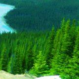 ビッグフットの森