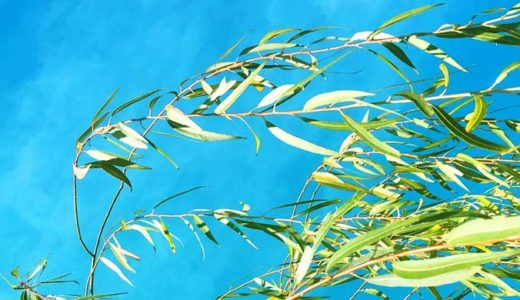 「植物細胞」構造の特徴。葉緑体、細胞壁、大きな液胞、