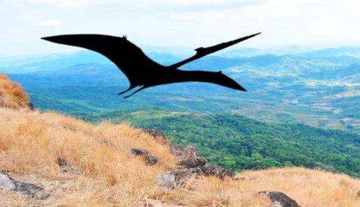 「翼竜」種類、飛行能力、進化史。恐竜との違いはどのくらいか