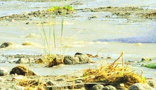 「カブトガニ」研究小史。種類ごとの大きさ、生息地による生態の違い。
