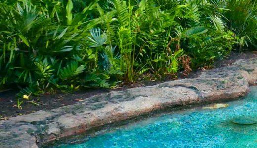アカンバロの恐竜土偶、カブレラストーン、謎の足跡「恐竜のオーパーツ」