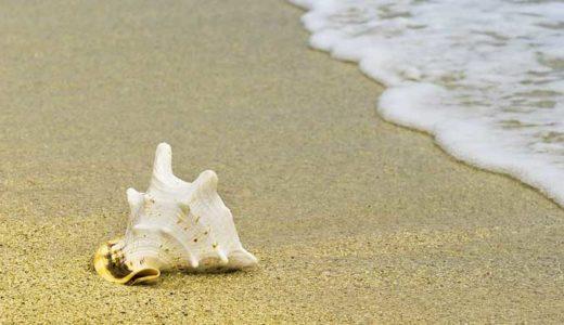 「貝」二枚貝、巻貝の進化分類。生物ジャングル、家、畑、特殊化の謎