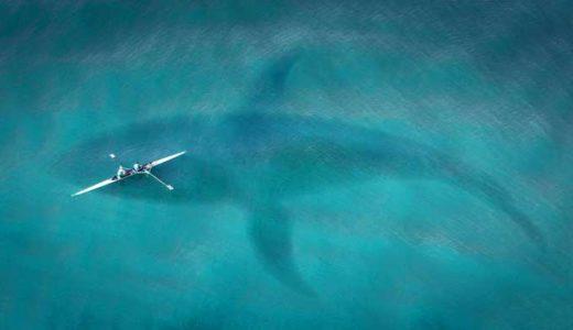 オゴポゴ、チャンプ。巨大ヘビ、トカゲ、カメ、タツノオトシゴ「北米の湖の怪物たち」
