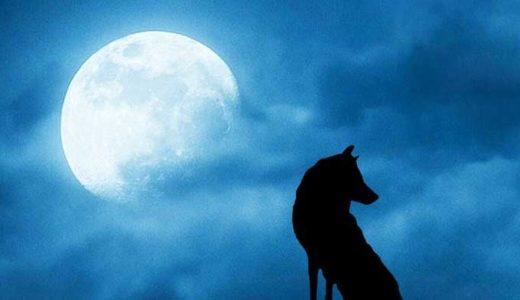 「オオカミ人間」狼憑きと呼ばれた呪い。獣に変身する魔法使いたちの伝説