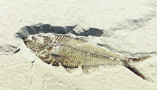 「化石記録と進化」骨はどのように石になるか、バイオマーカーとは何か