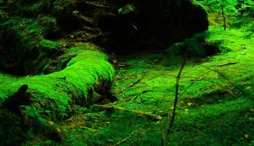 「古エッダの世界」ユグドラシルの生物たち。古の魔法の数々